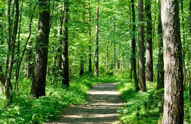 1993292-path-in-summer-forest.jpg