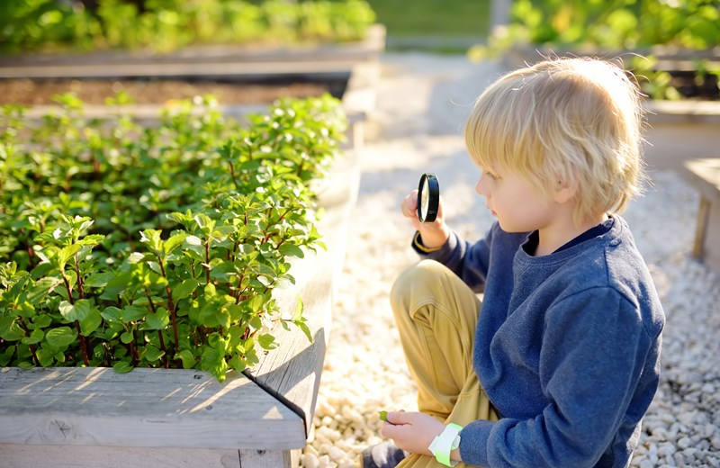 31986764-little-child-exploring-nature-with-magnifying-glass-in (1).jpg